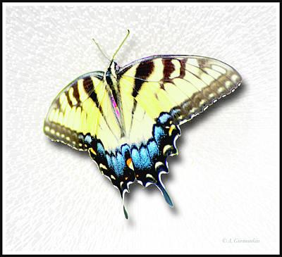 Digital Art - Swallowtail Butterfly  by A Gurmankin