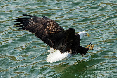 Birds Rights Managed Images - Talons First Royalty-Free Image by Mike Dawson