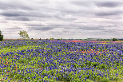 Photograph - Texas Wildflowers 2 by Victor Culpepper