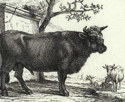 Rural Scenes Drawing - The Bull by Paulus Potter
