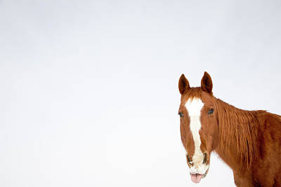 Horses Photograph - The Horse Collection #1 by Tom Cuccio