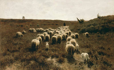 Flock Of Sheep Painting - The Return Of The Flock, Laren by Anton Mauve