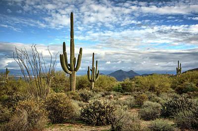 Photograph - The Sonoran Desert  by Saija Lehtonen