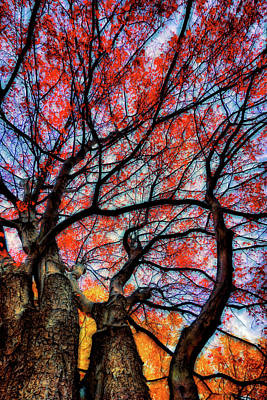 Photograph - The Tree by Lilia D