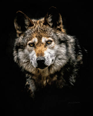 Digital Art - The Wolf by Ernie Echols