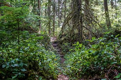 Journey Wall Art - Photograph - Thickly Wooded Area by Ric Schafer