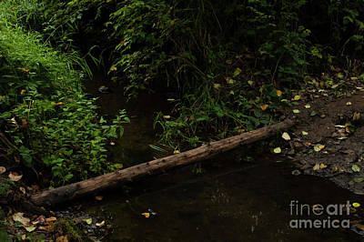 Photograph - Tree Log Across Small Stream  by Jim Corwin