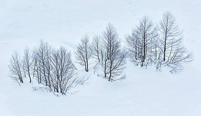 Trees Art Print by Svetlana Sewell