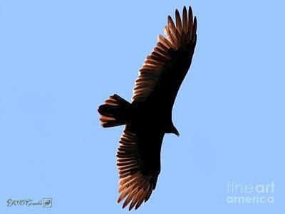 Photograph - Turkey Vulture In Flight by J McCombie