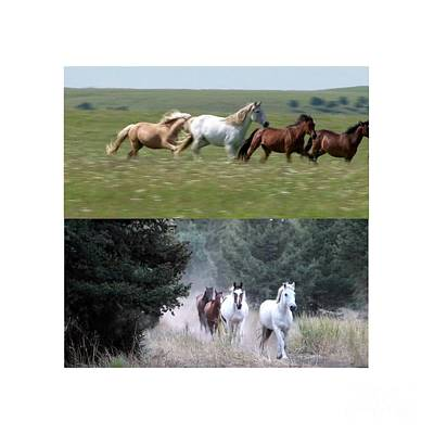 Twin Photos Awesome North American Mustangs Horses Cowboys Photography See On Posters Pillows Curtai Original