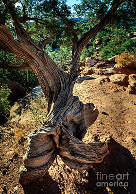 Photograph - Twisted Tree by Richard Smith
