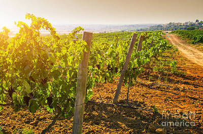 Vineyard Art Print by Carlos Caetano