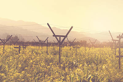 Nature Photograph - Vineyard In Spring With Vintage Instagram Film Style Filter by Brandon Bourdages