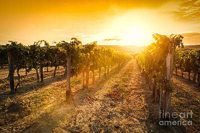 Fruit Photograph - Vineyard In Tuscany, Italy by Michal Bednarek