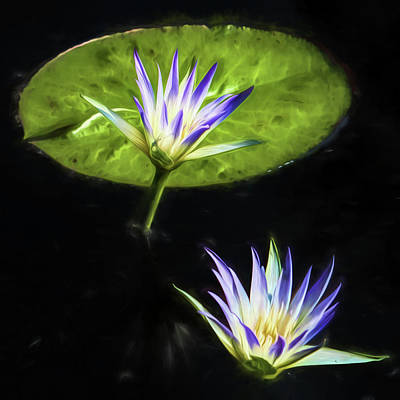 Photograph - Water Lilies by John Freidenberg