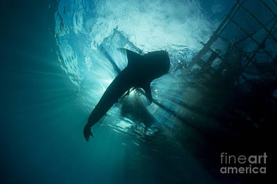 Water Filter Photograph - Whale Shark Swimming Up To The Surface by Mathieu Meur