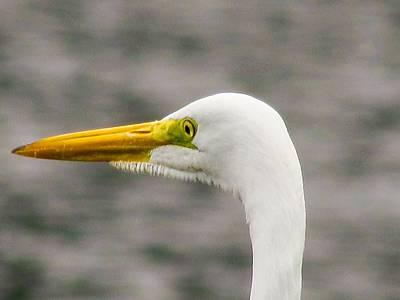 Photograph - White Bird by Cesar Vieira