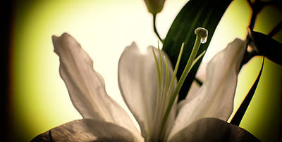 Photograph - White Lilly Flower by John Williams