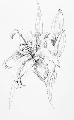 Drawing - White Lily by Hae Kim
