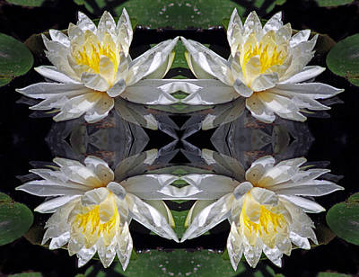 Nature Center Pond Digital Art - White Lotus Mandala by Daniel Unfried
