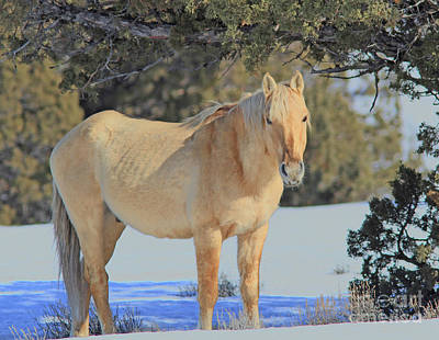 Photograph - Wild Mustang by Gary Wing