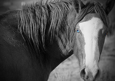 Photograph - Wild Mustang Horse by Waterdancer