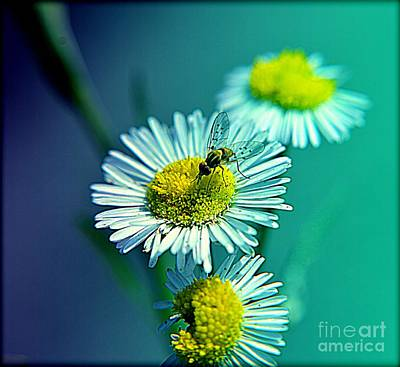Photograph - Wildflower by Janice Spivey