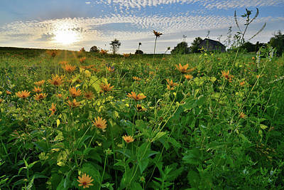 Photograph - Wildflowers Of Glacial Park by Ray Mathis