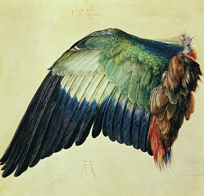 Still Life Drawing - Wing Of A Blue Roller by Albrecht Durer