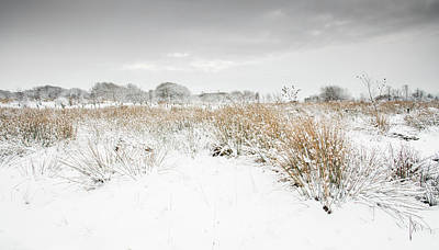 Digital Art - Winter Landscape by Mike Taylor