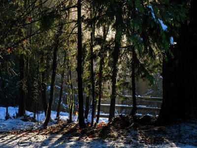 Photograph - Winter Light  by Inge Riis McDonald