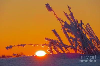Photograph - Winter Sunrise  by Irina Hays