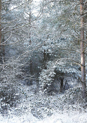 Winter Art Print by Svetlana Sewell