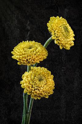 Wall Art - Photograph - 3 Yellow Flowers by Martin Belan