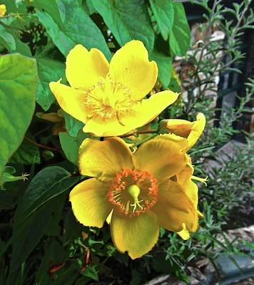 Photograph - Yellow Flowers by Stephanie Moore