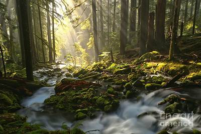 Photograph - Light Beam Serenity by Adam Jewell