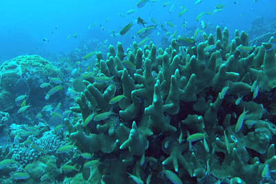 Mixed Media - Zanzibar Island Sea  Coral Reef Vegitation Bio Diversity Of Exotic Fish Plants And  Organisims Zanzi by Navin Joshi