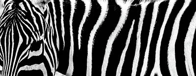 Abstract Patterns Photograph - Zebra Stripes by Martin Newman