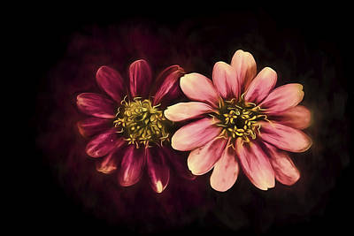 Photograph - Zinging Zinnia Aglow by Kay Brewer