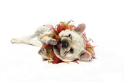 Puppies Digital Art - 3010.113 Therapet by M K  Miller