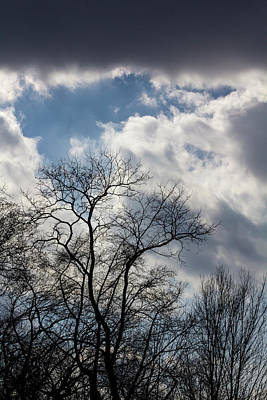 Photograph - Trees And Clouds by Robert Ullmann