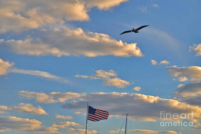 Photograph - 32- Patriotic Pelican by Joseph Keane