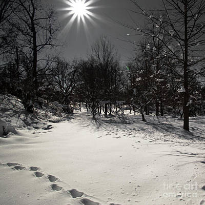 Photograph - Snow by Avril Christophe