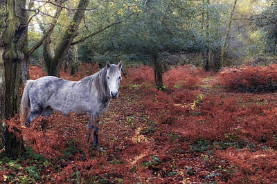 New Britain Photograph - New Forest - England by Joana Kruse