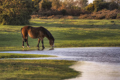 New Forest - England Art Print