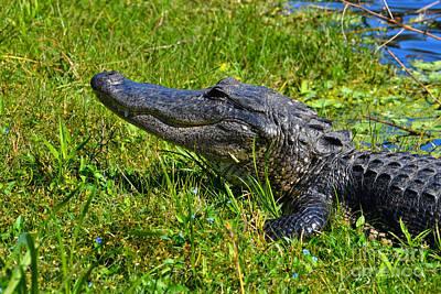 Photograph - 35- Florida Alligator by Joseph Keane