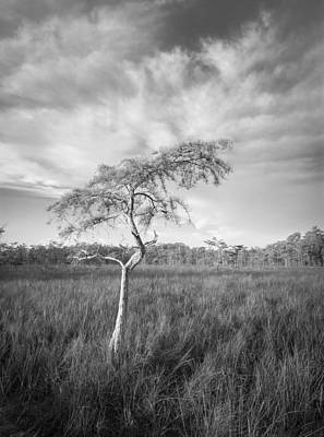 Photograph - Untitled by Bill Martin