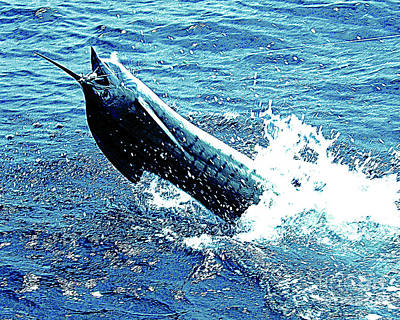 Photograph - 350 Lb Marlin On The Line by Merton Allen