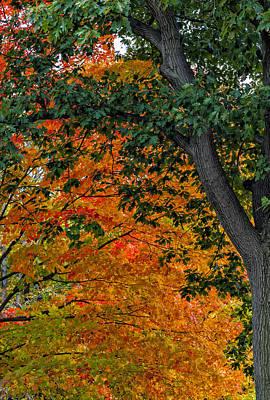 Lady Bug - Fall Foliage by Robert Ullmann