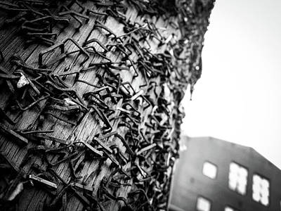 Photograph - Urban Telephone Pole by Vintage Pix